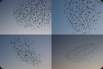 wave_of_birds