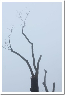 111220_fog tree