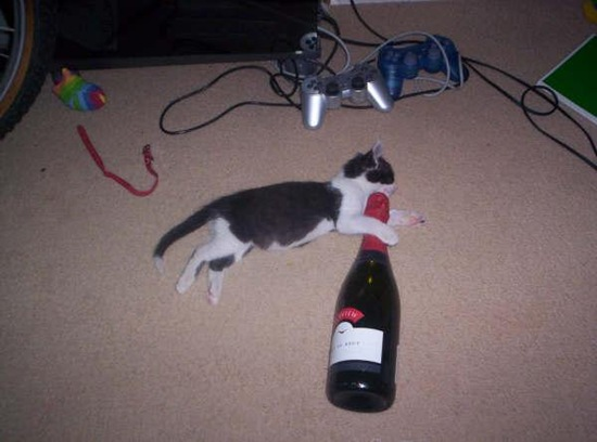 Can-cat-drink-alcohol-12