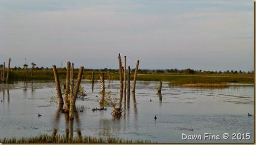 Viera Wetlands (68)