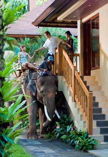 Through the rear window world s unusual hotels bali for Unusual accommodation bali