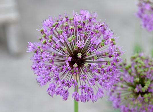 2013-05-23 flower