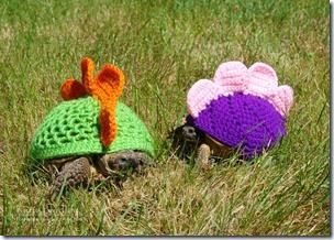 cosasdivertidas tortugas con ganchillo (12)