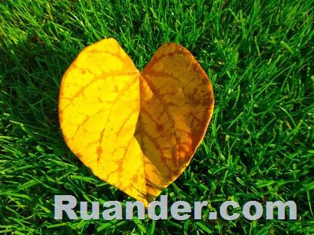 Fall Color 6 Ruander