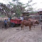 koeienmest brengen
