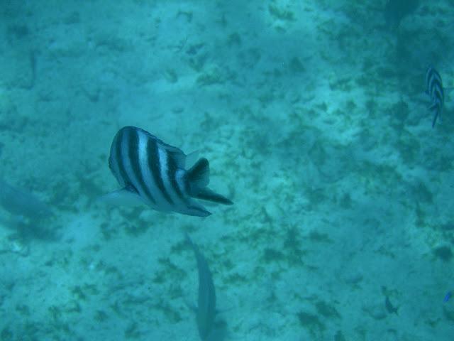 seychelles4_20070412_1437058684.jpg