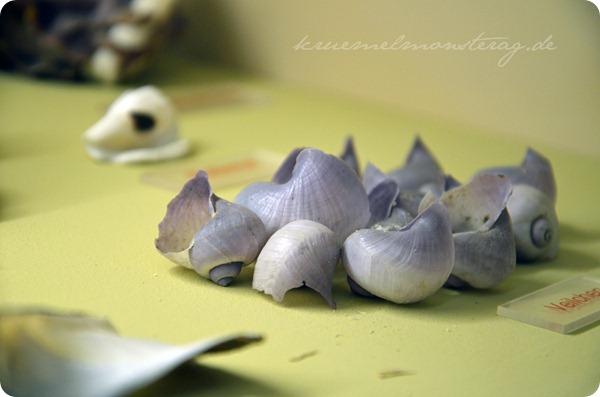 Wremen 20zwölf Tag 5 Muschelmuseum (26)