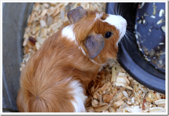 petting zoo IMG_9532