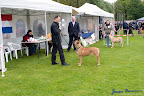 20100513-Bullmastiff-Clubmatch_31088.jpg