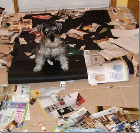 funny-cats-dogs-destroy-house-009