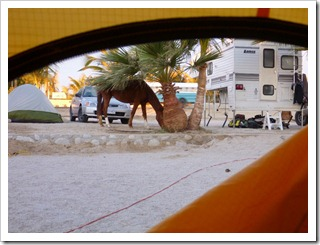 Horse in Yoyo&#39;s Campground
