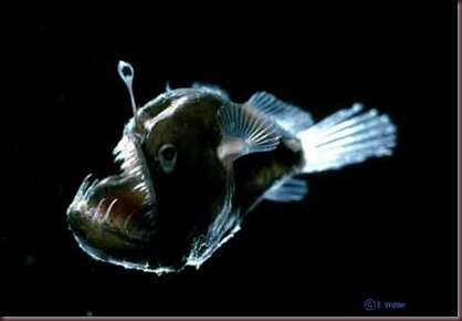 Amazing Animals Pictures Angler Fish (5)