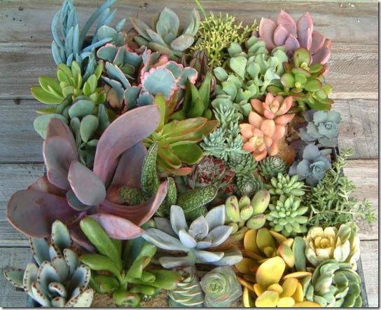 succulents apt therapy