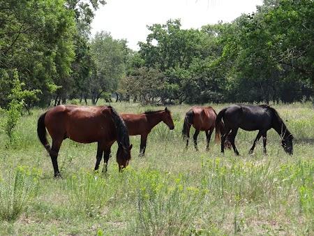 17. Caii din padurea Letea.JPG