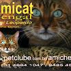animalworld_cat.jpg