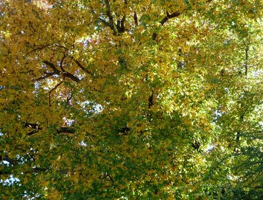 Gloria Ishizaka - Outono -  folhas 9