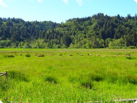 Roosevelt Elks