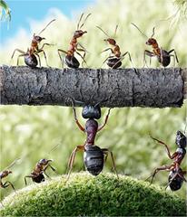 Increíbles fotografías macro de hormigas