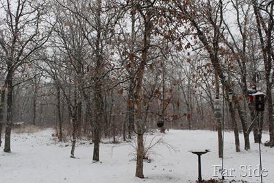 Snow December 15