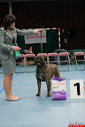 20130510-Bullmastiff-Worldcup-0892.jpg