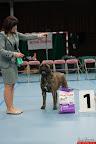 20130510-Bullmastiff-Worldcup-0892.jpg