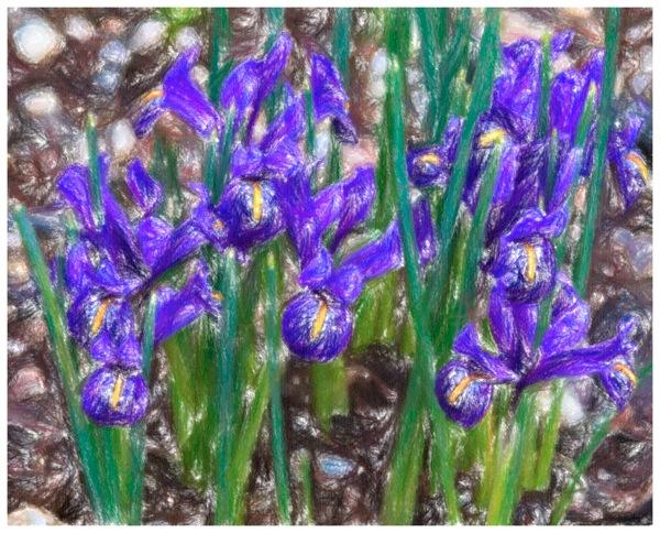 Tiny iris crayola