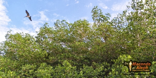 Viaje Celestún Yucatan 8