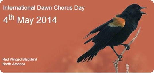 dawn chorus 2014 day