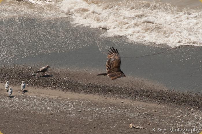 hawkcliff_Ken-10