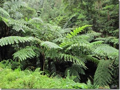 tropischer_Wald_mit_Farmbäumen