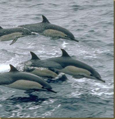 delfines comunes