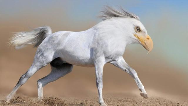 http://lh3.ggpht.com/-309y0WhzRYM/UY9AikHNzFI/AAAAAAAAVWQ/xUkZtjDh9rQ/incroci-animali-photoshop-03-terapixel.jpg?imgmax=640