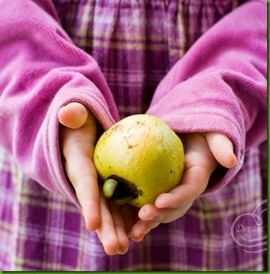 Cas Guava 1