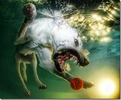 perros bajo el agua (6)