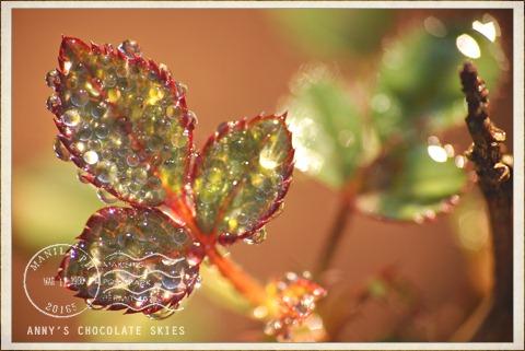 Bejeweled!