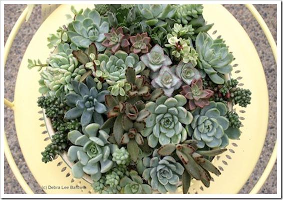 Succulent Tabletop