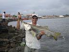Em Santa Catarina Guina Polessi encontrou este belo robalo de 12 kilos