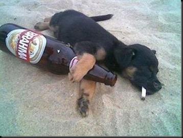 cachorro-bebado-na-praia