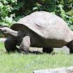 Philadelphia Zoo Tortoise