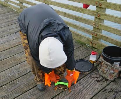 CrabbingOffthePublicPier-1-2014-04-26-09-43.jpg