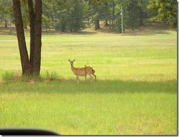 3.  Deer