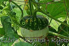 Glória Ishizaka -   Kyoto Botanical Garden 2012 - 75