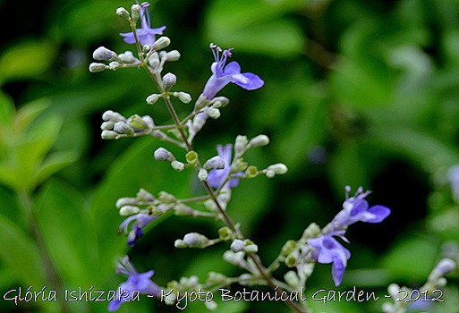 Glória Ishizaka -   Kyoto Botanical Garden 2012 - 36
