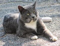 smokey kitty in driveway1..10.2013