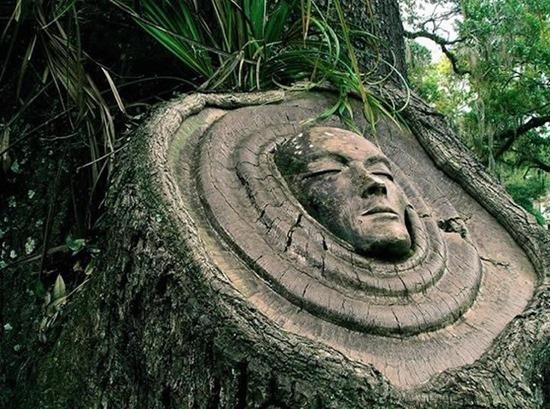 espírito árvore 01