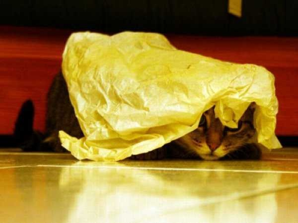 Os gatos não são muito bons em esconde-esconde 9