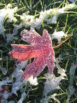 凍った落ち葉