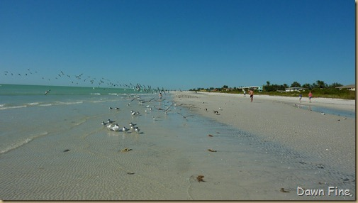 Sanibel Shell and birds_177