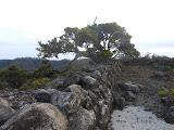 Rengganis peak scenery just after dawn, Argopuro (Dan Quinn, December 2012)