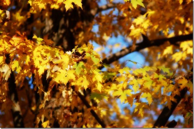 sunshine fall